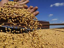 Há 20 dias do início da safra de soja Mato Grosso tem 18% dos insumos para comprar