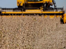 Área agrícola do Brasil deve crescer 1,5% ao ano na próxima década, dizem FAO e OCDE