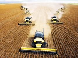 Apesar dos preços baixos, Brasil deve aumentar área de soja