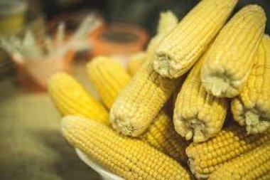 Ministro defende fabricação de etanol a partir de milho no Brasil