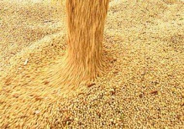 Amapá se abre para exportação de grãos e já impulsiona negócios