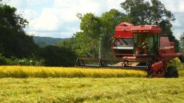 Mercado agrícola inicia segundo semestre sem grandes impactos da pandemia