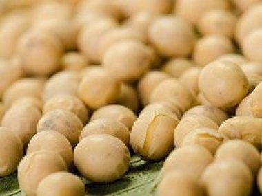 Comercialização de derivados de soja aumenta no Brasil