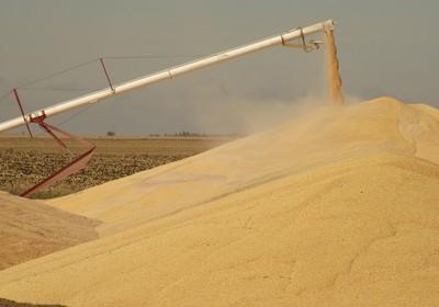 Colheita de milho nos EUA é cortada e preços disparam