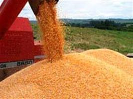 MT e PR lançam 7 milhões de toneladas de milho no mercado
