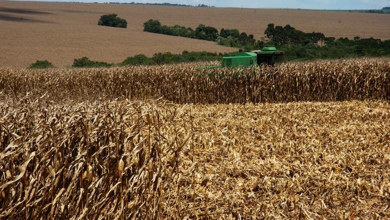 Consultoria eleva aposta para produção e exportação de milho do Brasil