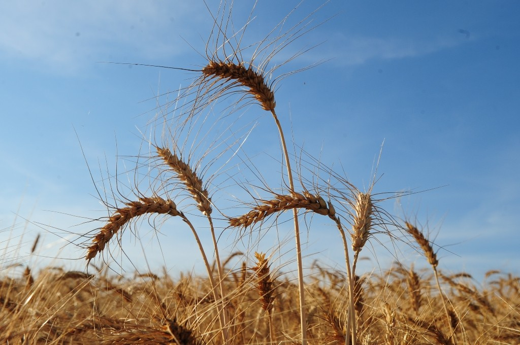 Soja e trigo lideram movimentação de cargas no Porto de Rio Grande