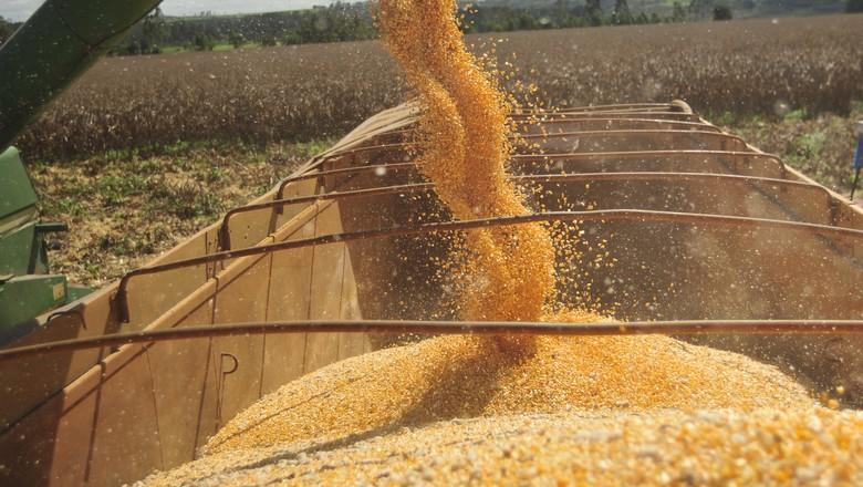 Colheita do milho passa de 95% da área em Mato Grosso