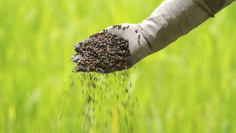 Com rebaixamento, lucro de produtor rural deve cair ainda mais