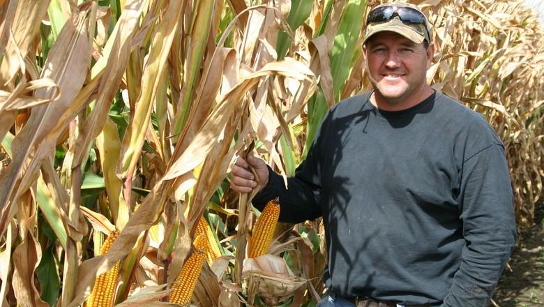 Lavouras de milho têm leve piora e as de soja estabilizam nos EUA