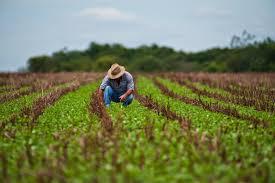Sem crédito, agricultor troca insumos por produtos agrícolas
