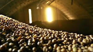 Previsão de estoques de soja e milho da safra antiga dos EUA fica abaixo da expectativa