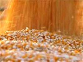 Terminal de Grãos do Maranhão começa a exportar milho; recebe primeiro trem